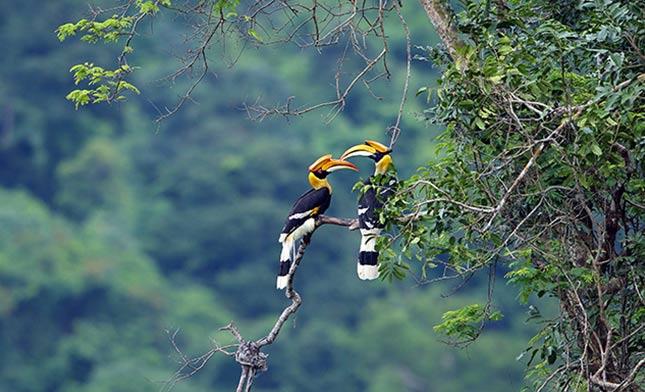ציפורים בג'ונגל
