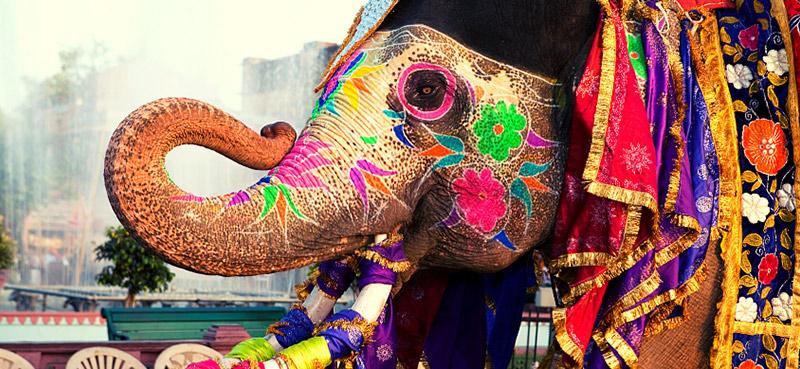 פיל מקושט ומאופר בקרלה שבהודו