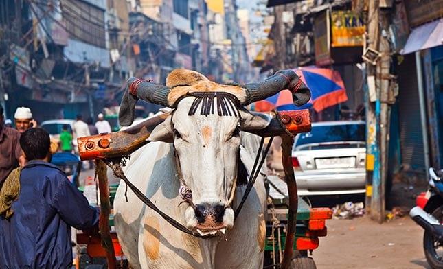 טיול מאורגן להודו