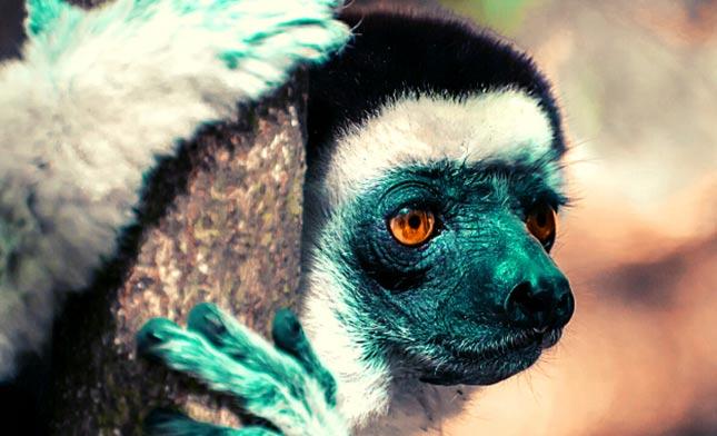 טיול למדגסקר