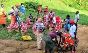 שוק מקומי בקיגאלי רואנדה