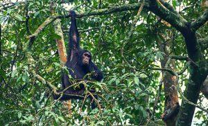 יער ברואנדה
