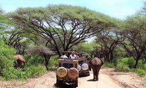 ג'יפ ופילים בשמורת טרנגירי בטנזניה