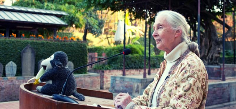 ג'יין גודול עם בובת שימפנזה