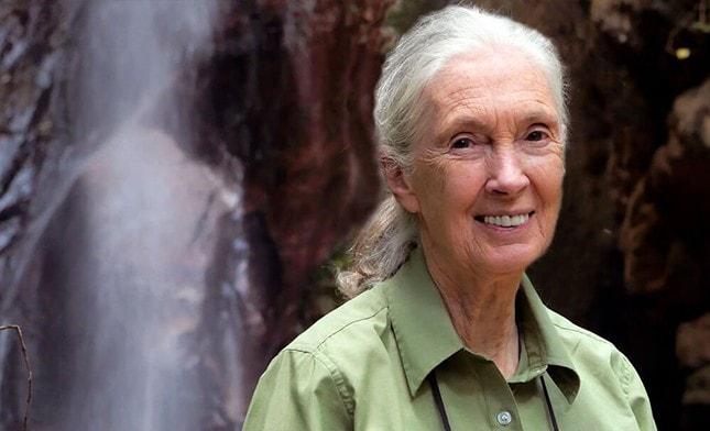 ג'יין גודול ליד המפל בשמורת גומבי בטנזניה