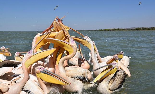 שקנאים באגם טאנה אתיופיה
