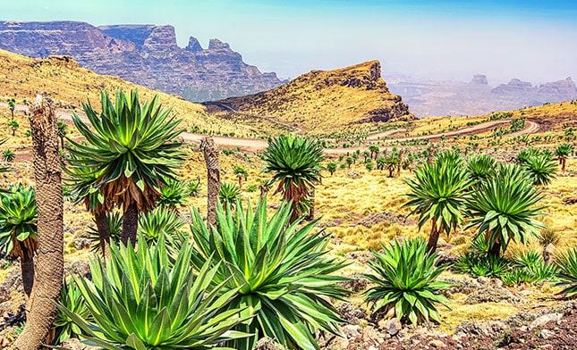 הרי סימיאן אתיופיה