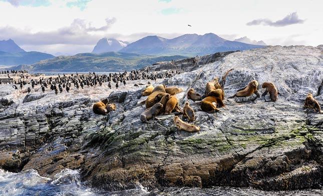 ארץ-האש-Beagle-Channel,-Ushuaia