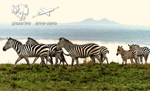 טיול לטנזניה בנדידה הגדולה