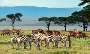 זברות ואיילים בשמורת ימת נאיוושה בקניה