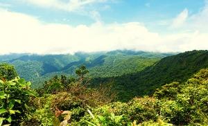 יער העננים במונטה ורדה קוסטה ריקה